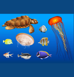 Different types of sea animals in ocean vector
