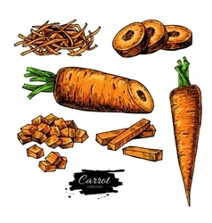 Carrot hand drawn set vector image vector image
