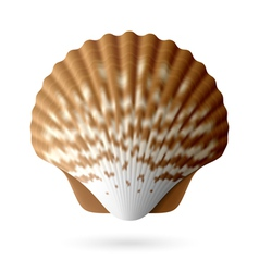 Scallop seashell vector image