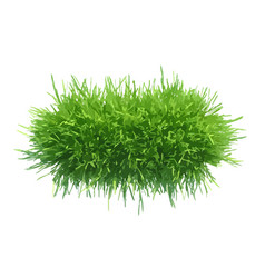 Tuft of grass for the banner vector