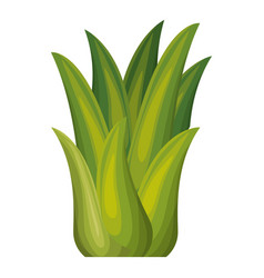 White background with corn plant vector
