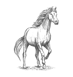 White horse with stomping hoof portrait vector