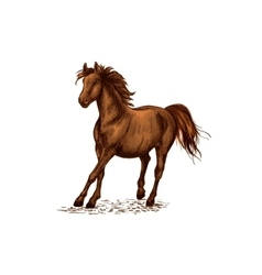 Arabian brown stallion galloping on horse races vector image