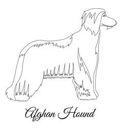 Afghan hound outline vector