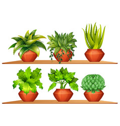 different types of plants in pots vector image