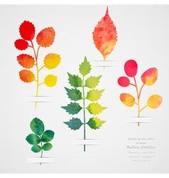 herbarium Vintage template Watercolor leaf vector image