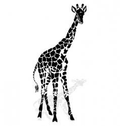 Giraffe vector