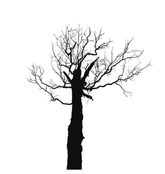 Silhouette old dry tree vector image