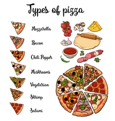 Types of pizza and basic ingredients vector image