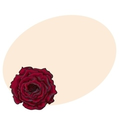 Deep red ruby rose top view isolated sketch vector