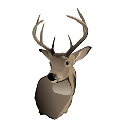 Whitetailed deer buck vector