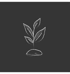 Sprout drawn in chalk icon vector