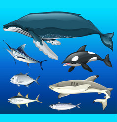 Different types of fish under the sea vector