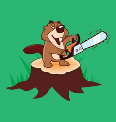 Beaver holding a chainsaw standing on a stump on a vector