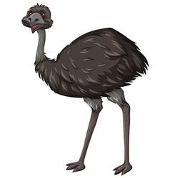 Emu bird on white background vector