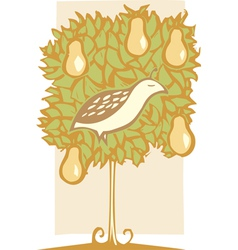 Partridge and pear tree vector