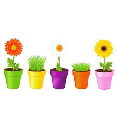 Colorful Pots With Daisies And Grass vector image