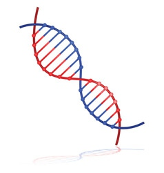 dna strand vector image vector image