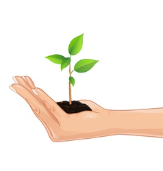 Hand holding a green plant vector image