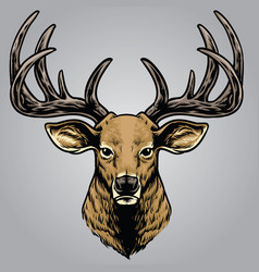 hand drawing style of deer head vector image vector image