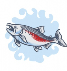 salmon vector image vector image