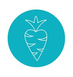 Sticker delicious carrot vegetable design vector