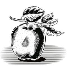 Yellow apple white background vector
