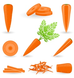 Icon set carrot vector