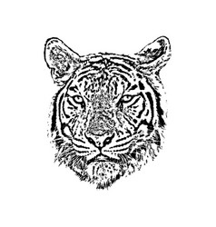 a tiger face on white background wild animals vector image