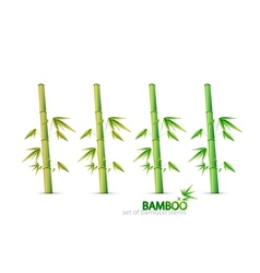 bamboo stems vector image vector image