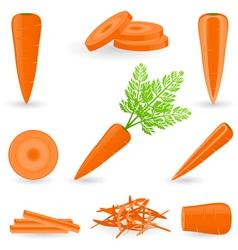 Icon set carrot vector