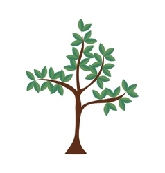 tree plant leaves nature green icon graphic vector image vector image