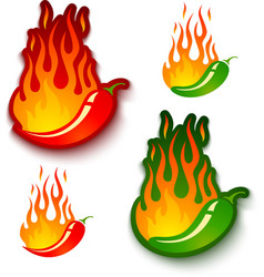 jalapeno and chili vector image