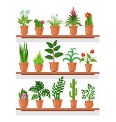 indoor plants on shelf vector image vector image