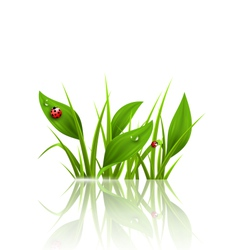 Green grass plantain and ladybugs with reflection vector