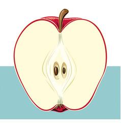 Red apple cut in half vector