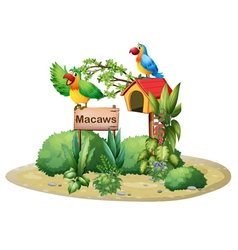Two colorful parrots above a signboard and a vector image vector image
