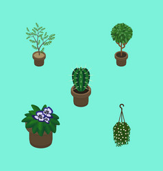 Isometric plant set of blossom peyote tree and vector