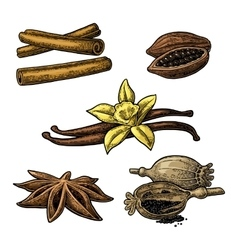 Set of spices anise cinnamon cocoa vanilla vector