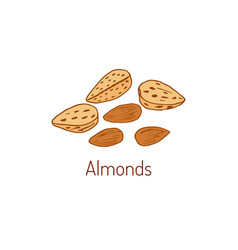 almond hand drawn vector image