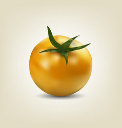 Photo realistic yellow tomato vector