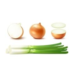 Set whole and sliced onion bulbs with green onions vector
