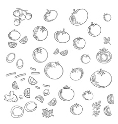 Farm tomatoes vegetables sketch icons vector
