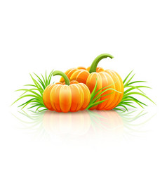Ripe pumpkin vegetables vector
