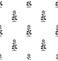 Sunflower icon in black style isolated on white vector