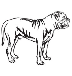 decorative standing portrait of boerboel vector image vector image