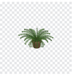 Isolated fern isometric plant element can vector
