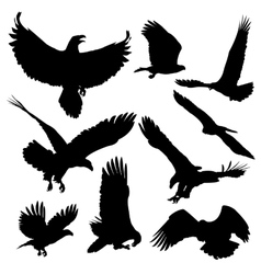 Bald eagles silhouettes isolated on white vector