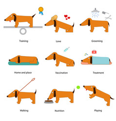 cartoon caring for dog set vector image
