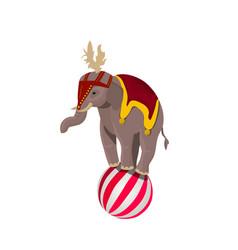 circus elephant balancing on ball vector image vector image